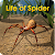 Life of Spider file APK Free for PC, smart TV Download