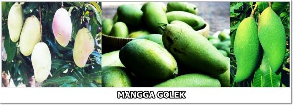 mangga-golek-2-horz-01.jpg