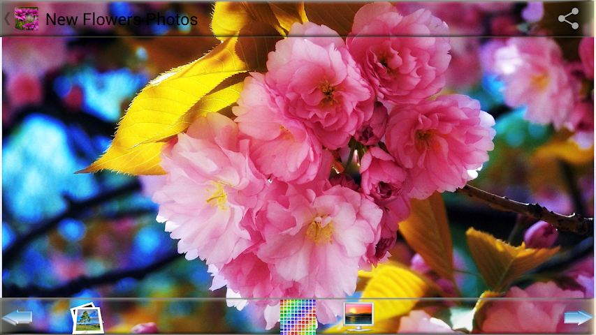 android New Flowers Photos Screenshot 4