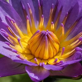 What a colour..... by Bernard Tjandra - Flowers Single Flower