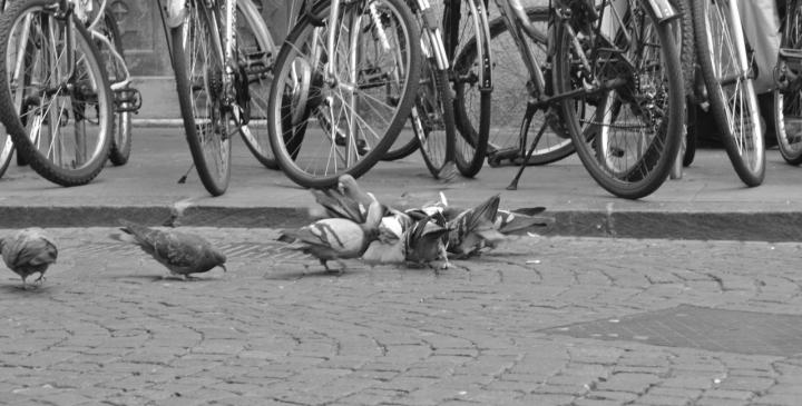 Le biciclette di Tiwa