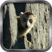 Lemur Live Wallpaper