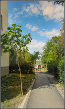 Photo: Arborele Printesei (Paulownia) - de pe Str. Nuferilor - 2017.09.05