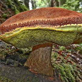 ShroomBurger by Prakash Purushotham - Nature Up Close Mushrooms & Fungi ( mushroom,  )
