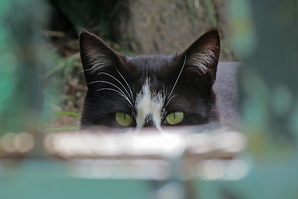 Due occhi che mi guardano di LucaMonego