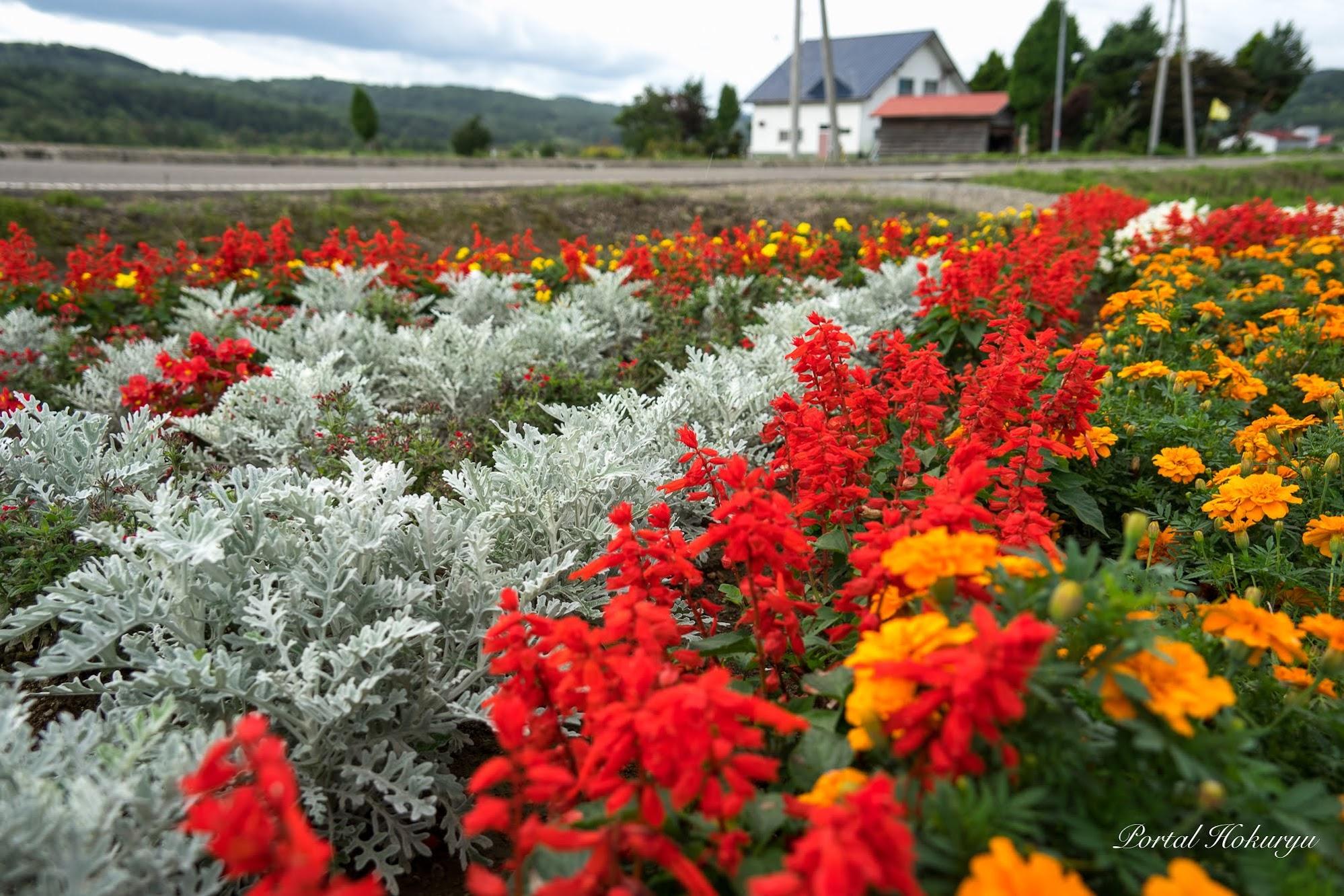 秋の庭を飾る花々