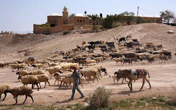 Photo: Bedouin sheapard at Nebi Musa (Muslim Mausoleum of Moses)