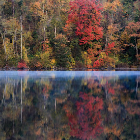 Fall Reflections by Troy Snider - Landscapes Forests ( water, autum, color, fall, trees, mist )