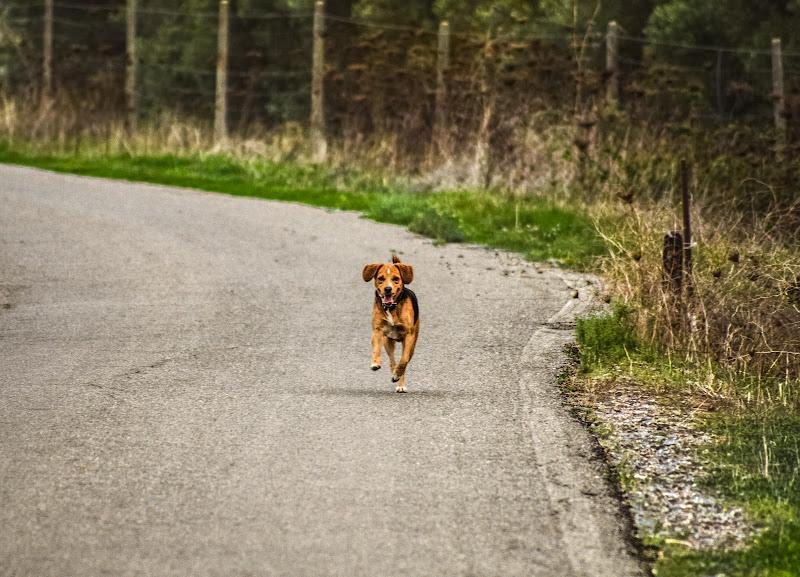 Corri! di antonello1685