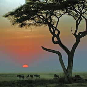 Sunset at Masaï Mara by Lorraine Bettex - Landscapes Sunsets & Sunrises (  )