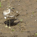 Water Thick Knee