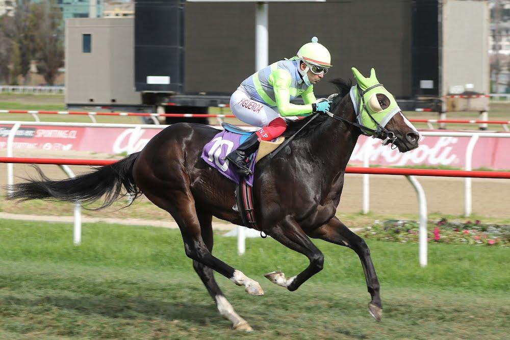 Iron Will (Omayad) se quedó con la victoria en Handicap (1000m-Pasto-VSC).