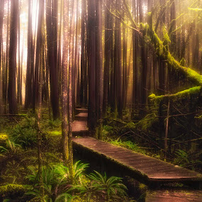 Rain forest by Anne-Cecile Pflieger - Landscapes Forests ( canada, pathway, moss, magic light, woods, fern, annececilegraphic, tree, path, shining through, rain forest, trees, light, old man beard,  )