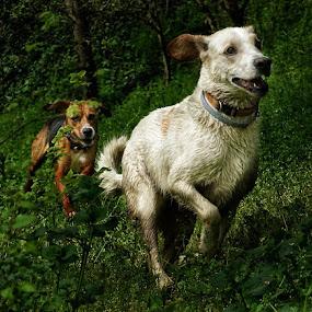 Greased lightning. by Matthew Miller - Animals - Dogs Running (  )