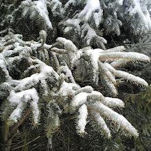 Photo: Me encanta ver las ramas con #nieve