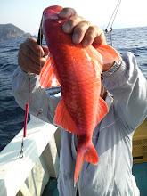 Photo: これもインチク! おじさんがオジサンを釣りました! ははっ!