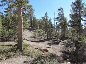 Photo: The trail mellows out as it begins to climb the arm extending northwest from the summit of Dawson Peak.
