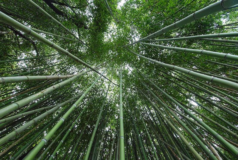 Lance di bambù di Daimon