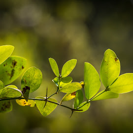 by Sanjay Nagaonkar - Nature Up Close Leaves & Grasses