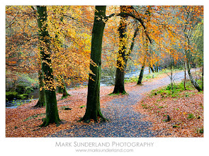 Photo: #FallFriday  Strid Wood in Autumn  These woods along the banks of the River Wharfe near Bolton Abbey are my favourite place for a walk amongst the falling leaves in autumn, so I'm looking forward to the two autumn photography workshops I'm running there with fellow Yorkshire photographer +sam oakes (see http://natural-light-workshops.co.uk if you'd like a look at what we're doing).  It's still quite mild though - I think we could do with a few sharp frosts to get those colours coming in...  Canon EOS 5D, 24-105mm at 60mm, ISO 100, 0.6s at f16