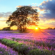 Perfect Sunset Live Wallpaper