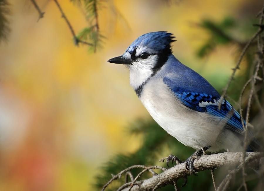 by Rolland Gelly - Animals Birds