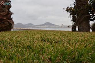 Photo: Césped al horizonte.