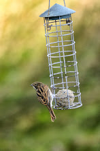 Photo: Reed Bunting