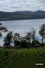 Photo: Marion's vineyard & Nahani