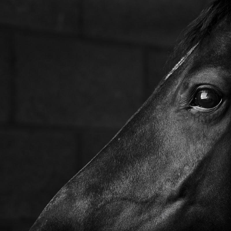 Il cavallo di sapo56