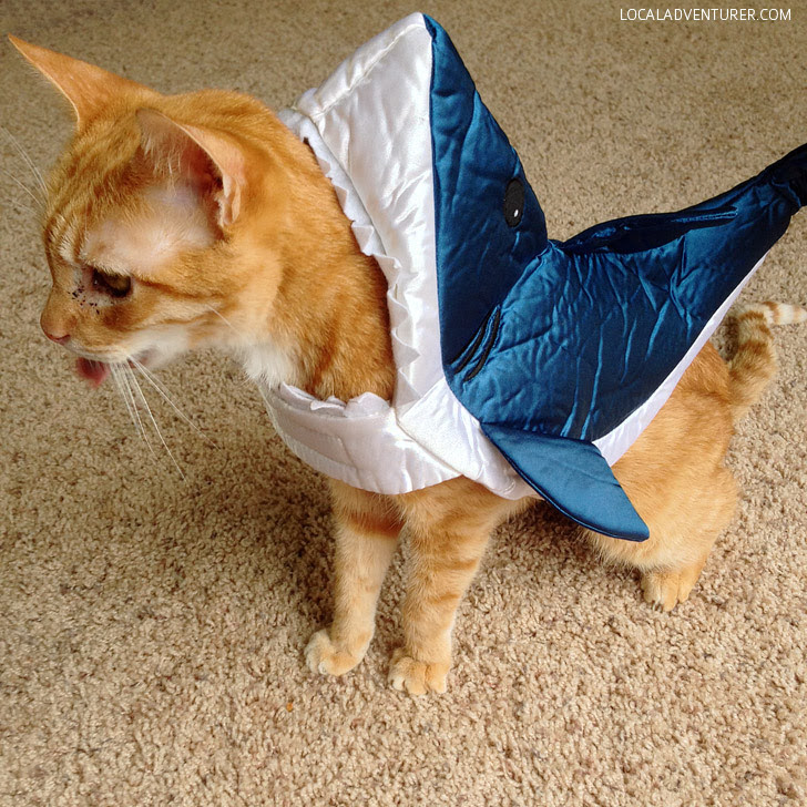 Shark Cat! Halloween Costumes for Cats.