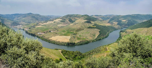 The Douro River as it winds through a picturesque stretch of irrigated farmland in Pinhão, Portugal.