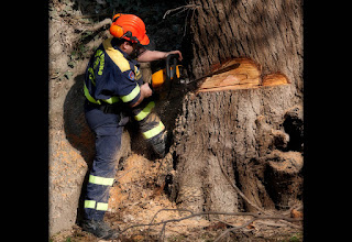Photo: in the Ticino's Park a forester cuts a tree destroyed by the storm  #ManlyMondays +Alan Shapiro +Kjetil Greger Pedersen +Mark Rodriguez +Barry Blanchard +Dave Daniels