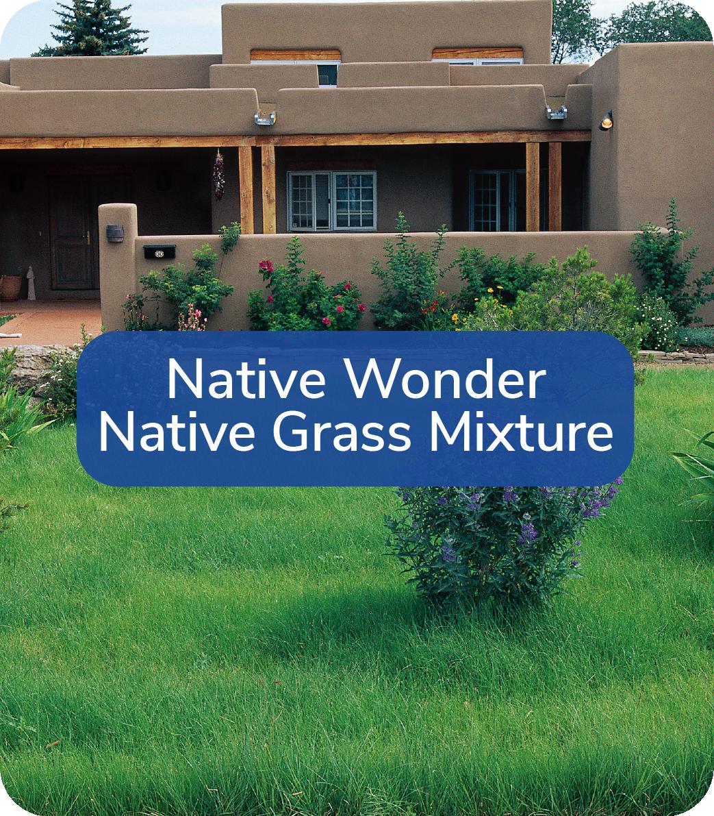 native wonder grass