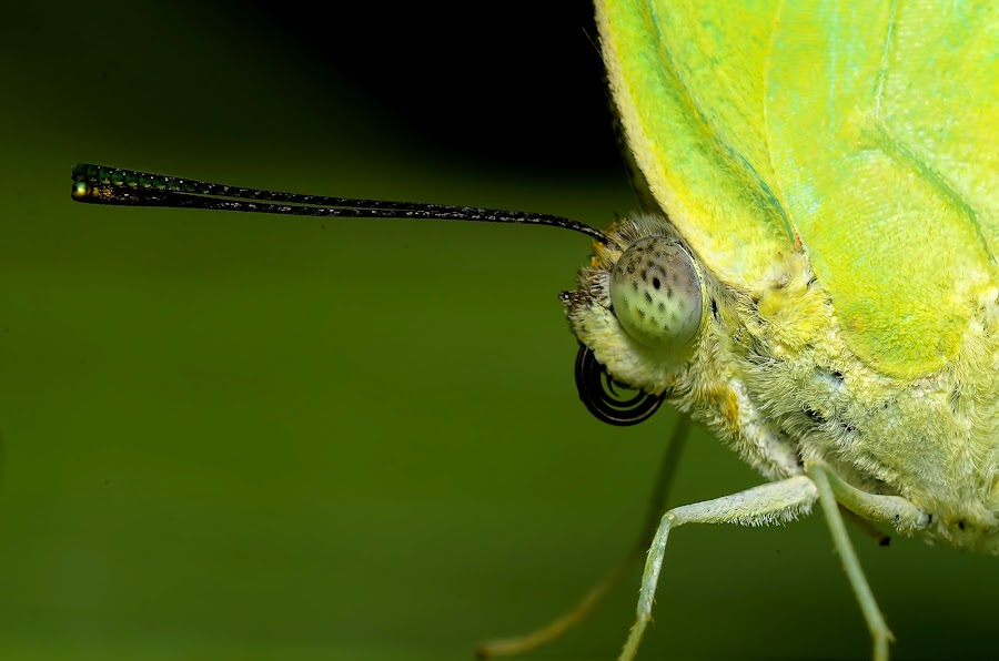 eyes by Sunny Joseph - Animals Insects & Spiders
