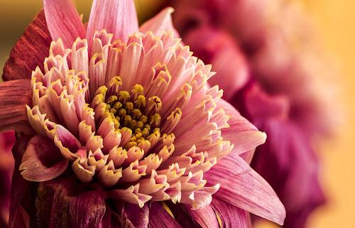 by P Murphy - Flowers Single Flower