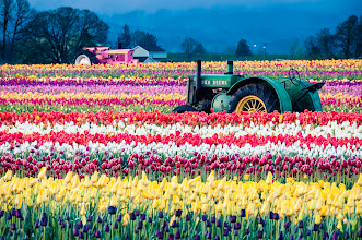 Photo: Resting in the Fields  Happy Friday everybody! Here's some tractors doing what I plan to do this weekend. Rest. I hope you have a fantastic weekend.  #tulips  #floralfriday  #oregonlandscapephotography   Prints available:http://bit.ly/1lVtxHX