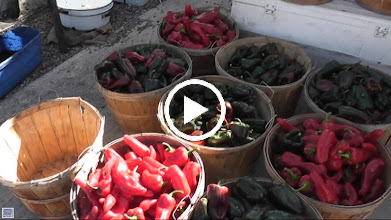 Video: Peppers, peppers, peppers...  an important commodity and diet item all around the world.  The flesh is often gone in archaeological sites but the seeds are very distinct and sometimes preserve surprisingly well.  Dr. Lee Newsom has found some pepper seeds in southwestern Florida sites attesting to their widespread use.  These were getting ready to be roasted in the market at Santa Fe, New Mexico and the aroma was intoxicating.