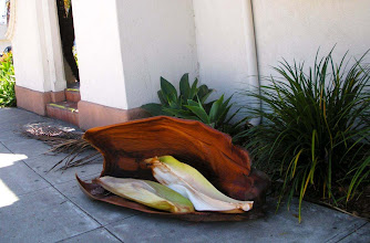 Photo: Premature Palm seed pod frond assembly abscission,Santa Barbara, California, August 2, 2012.