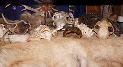 Photo: Various skulls, antlers, shells, and pelts at the Center.