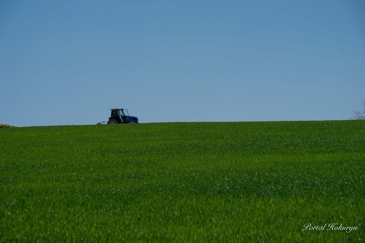 西の区画は緑肥で緑色