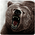 Bear Wallpa.. file APK for Gaming PC/PS3/PS4 Smart TV