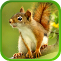 Squirrel Live Wallpapers icon