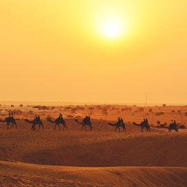 Sunset by Atin Saha - Landscapes Deserts ( sky, setting sun, safari, daybreak, dramatic, tourism, thar desert, india, life, nikon, horizon, trip, golden hour, caravan, sunset, golden, dawn, desert, travel, rajasthan )