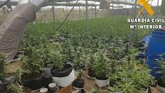 Interior del invernadero con las plantas de marihuana.