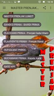 Master Prenjak Gacor - náhled