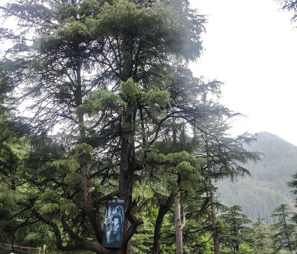 shiva tree kasol trip kullu parvati valley himachal+himalayas kasol pictures