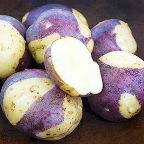 Masquerade-Potatoes.jpg