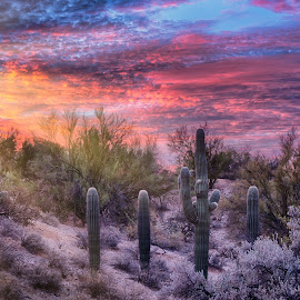 Cactus Valley by Charlie Alolkoy - Landscapes Deserts ( desert, sunset, arizona, tucson, sunrise, landscape, rays, cactus )