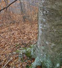 Photo: Eye on the tree